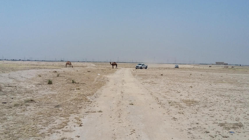 Harvested natural freshwater can be used for landscape irrigation in Kuwait